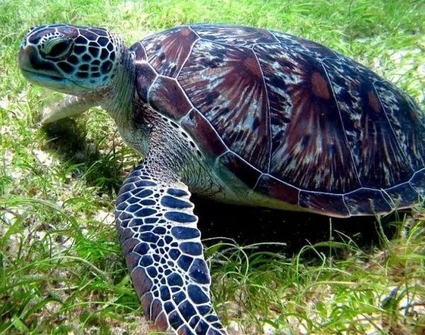 هناك علاقة بين السلاحف البحرية والسلاحف البرية