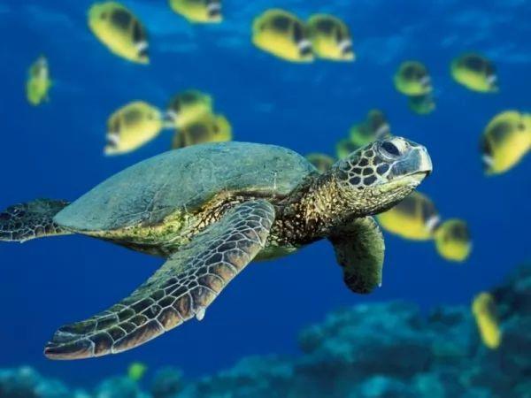 السلاحف البحرية من الكائنات المعمرة