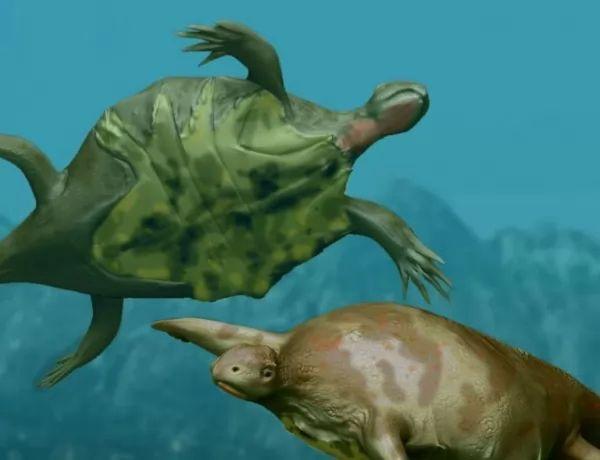 السلاحف البحرية موجودة منذ ملايين السنين