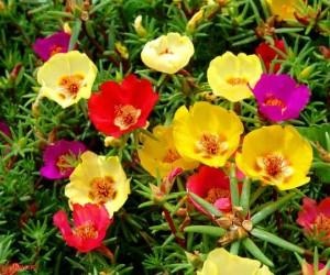 10 من اجمل الورود فى العالم بالصور