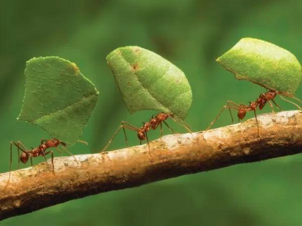 النمل يعمل في مجموعات دائما