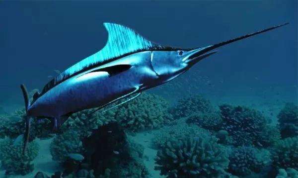 من اسرع الاسماك في العالم سمكة ابو سيف