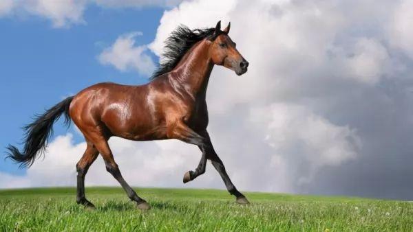من اجمل الخيول في العالم حصان موستانج