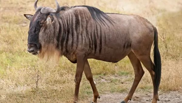 أسرع 10 مخلوقات بالعالم the-fastest-animals-on-earth_10231_1_1516389539.jpg
