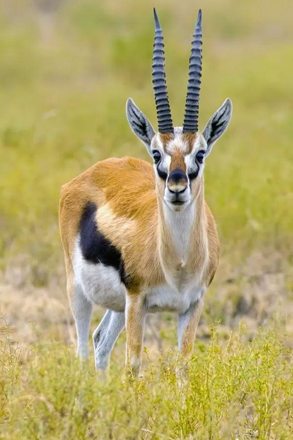 أسرع 10 مخلوقات بالعالم the-fastest-animals-on-earth_10231_1_1516389898.jpg