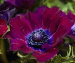 20 من اسماء الزهور النادرة ومعانيها بالصور