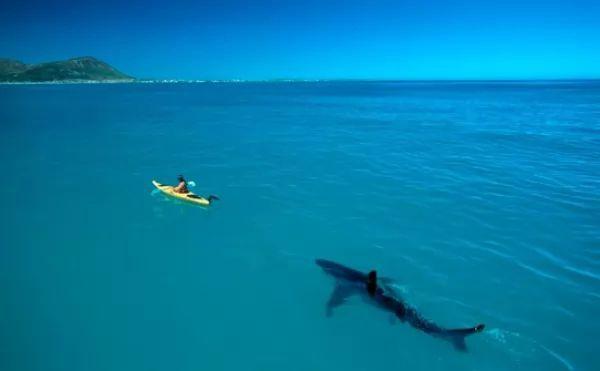 هجمات اسماك القرش