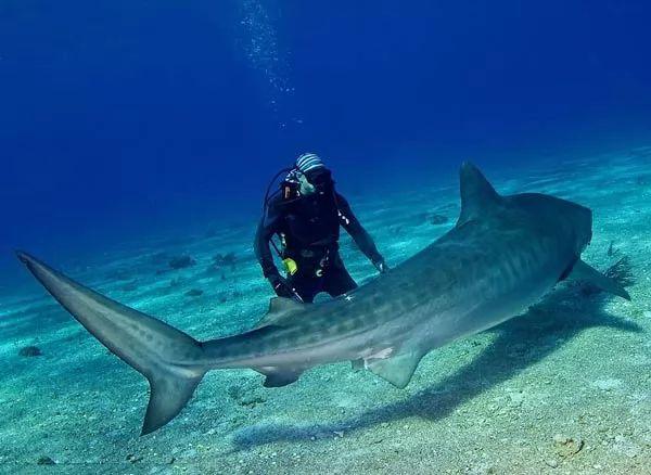 هجمات سمك القرش على البشر هي ظاهرة نادرة