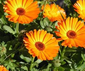 تعد النباتات العطرية من أجمل وأفضل النباتات على الإطلاق، فهي تمتلك منظر رائع يعطي شعور بالهدوء النفسي، كما أن رائحتها الفواحة تجعلك تشعر وكأنك تعيش ...