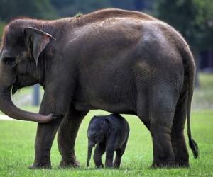 كثيرًا ما نستخدم كلمة (من الثدييات) عندما نتحدث عن خصائص حيوان ما، ولعلك تساءلت ما هي الثدييات من الأساس، وما هي خصائصها؟! لذا فنحن في هذا المقال ...
