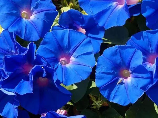 75cf924c9bff6 زهرة الأوركيد زهرة الحب والجمال والسحر - سحر الكون