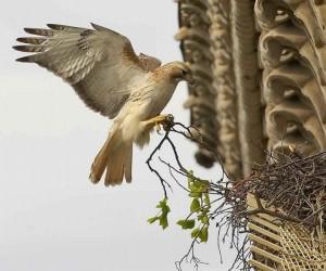 بما أن الطيور من الحيوانات الشديدة الظهور والاكثر حيوية، فقد كان للبشر علاقة معهم منذ بدء الخليقة، وهناك بعض من اشهر الطيور في التاريخ لعبت دورا مهما ...