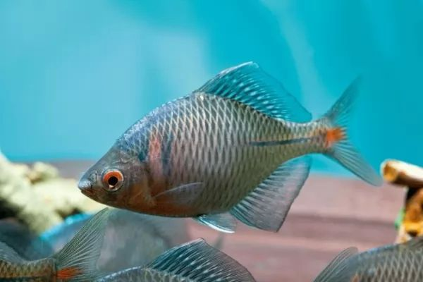 الأسماك البرية