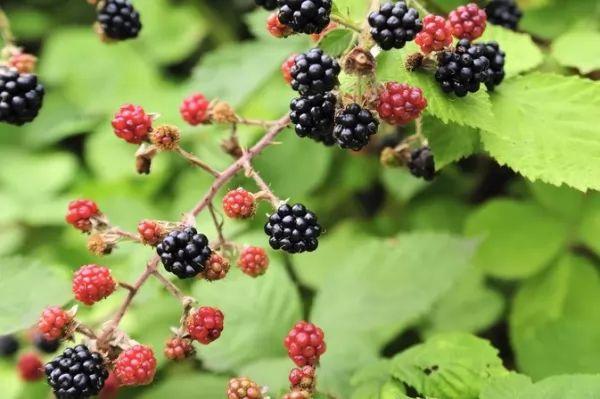 النباتات ال 10 البرية تستطيع أن تأكلها Wild-plants-eat_10540_1_1530373025
