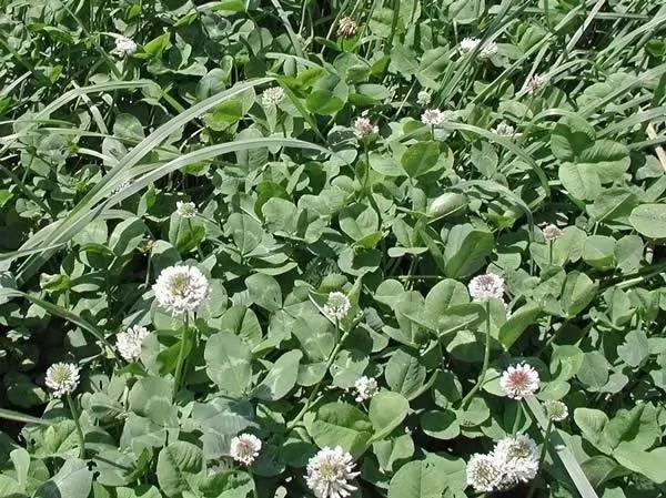 النباتات ال 10 البرية تستطيع أن تأكلها Wild-plants-eat_10540_3_1530373027