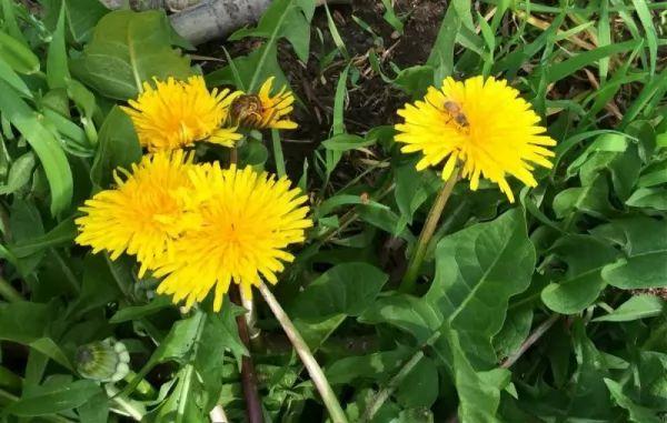 النباتات ال 10 البرية تستطيع أن تأكلها Wild-plants-eat_10540_4_1530373028