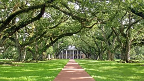 معلومات عن أشجار البلوط Ornamental-trees_10544_3_1530653247