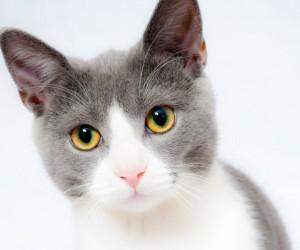 القطط هي من الحيوانات الليلية بشكل طبيعي، والقطط حيوانات صيادة ماهرة في أي وقت من اليوم، ولكن في الليل تطلق القطط عيناها في حالة تأهب قصوى، وعيون ...