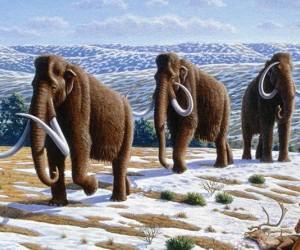 قبل خمسين إلى ستين مليون سنة، تجول أسلاف الأفيال في عصور ما قبل التاريخ كل كتلة أرض في العالم باستثناء قارة أستراليا والقارة القطبية الجنوبية، ...