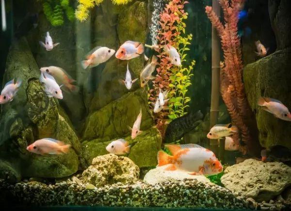 تأثير القلوية داخل حوض السمك على الكالسيوم
