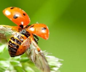 إذا كنت من محبي الحشرات وتبحث عن دائما عن الكثير من المعلومات عن أنواع الحشرات المختلفة، فأنت على موعد مقال جديد حول الحشرات وعلى وجه التحديد أنواع ...