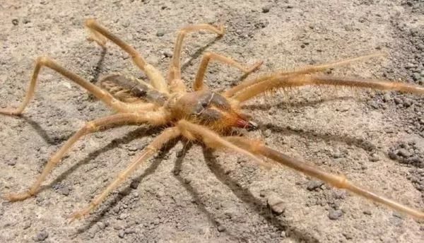 معلومات عن العنكبوتيات ودورة حياتها Life-cycle-arachnids_10705_1_1537390766