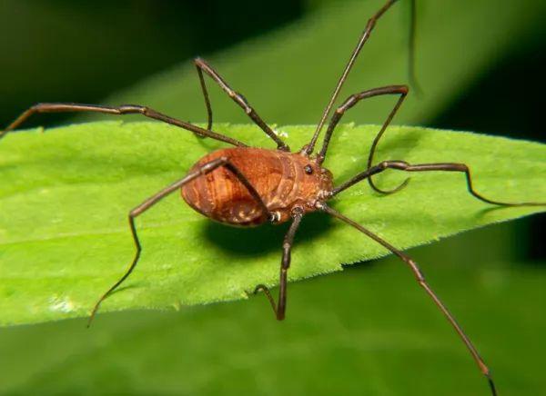 معلومات عن العنكبوتيات ودورة حياتها Life-cycle-arachnids_10705_2_1537390767