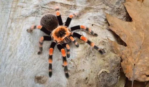 معلومات عن العنكبوتيات ودورة حياتها Life-cycle-arachnids_10705_3_1537390768