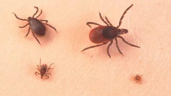 معلومات عن العنكبوتيات ودورة حياتها Life-cycle-arachnids_10705_4_1537390769