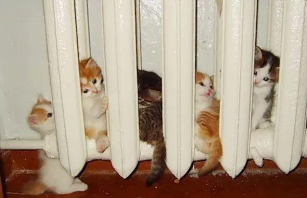 لماذا تبحث القطط عن الدفء ؟