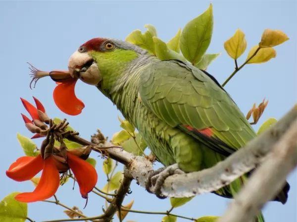 تعرف على الألوان التي يراها الببغاء ولا يراها البشر Colors-parrots-see_10729_1_1538528180
