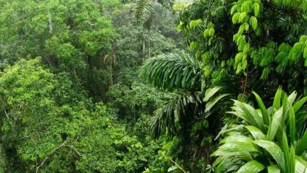 ما هي الأسباب التي تجعل الغابات مهمة في حياتنا؟ Forests-important_10746_1_1539214656