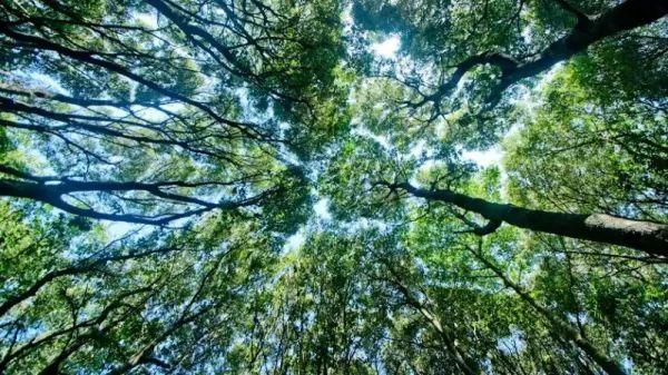 ما هي الأسباب التي تجعل الغابات مهمة في حياتنا؟ Forests-important_10746_1_1539214777