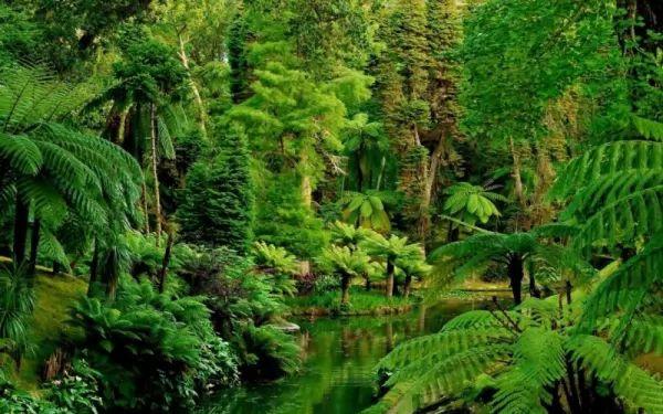 ما هي الأسباب التي تجعل الغابات مهمة في حياتنا؟ Forests-important_10746_1_1539214841