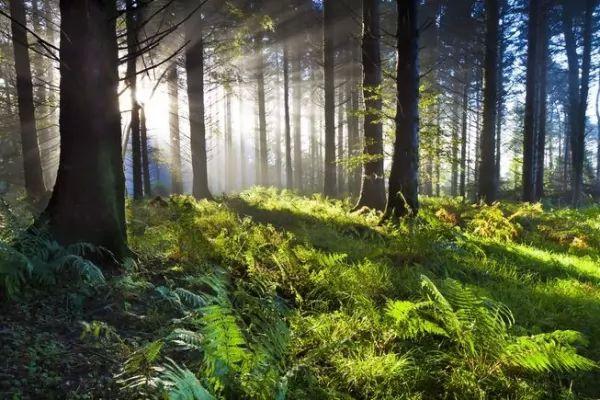 ما هي الأسباب التي تجعل الغابات مهمة في حياتنا؟ Forests-important_10746_2_1539214657