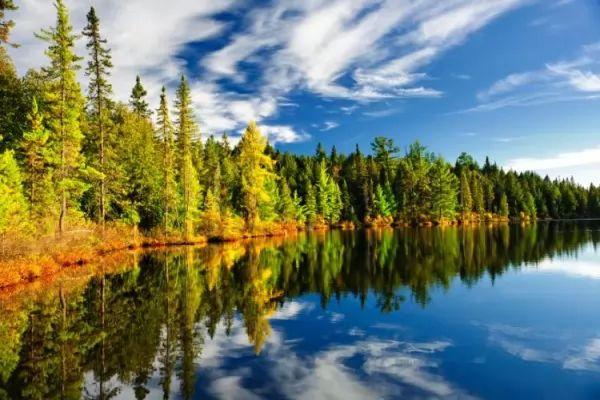 ما هي الأسباب التي تجعل الغابات مهمة في حياتنا؟ Forests-important_10746_2_1539214778