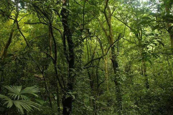 ما هي الأسباب التي تجعل الغابات مهمة في حياتنا؟ Forests-important_10746_2_1539214842