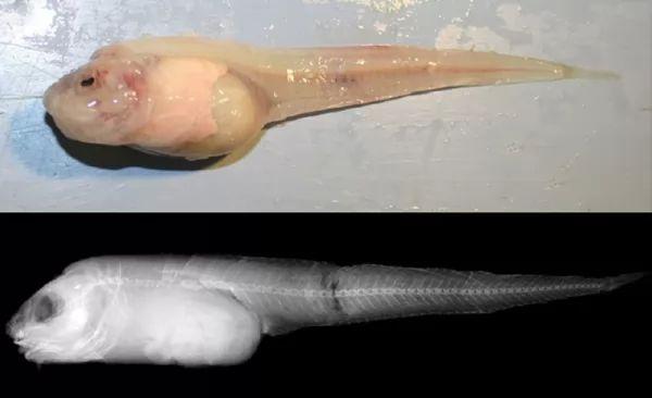 من الكائنات الحية المكتشفة حديثا لعام 2018 بالصور