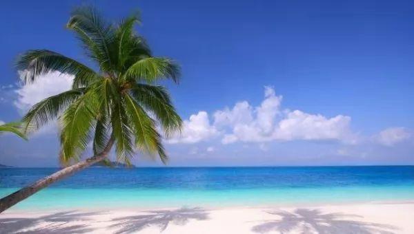 معلومات مذهلة عن أشجار النخيل بالصور Palm-trees-facts_10761_1_1539827340