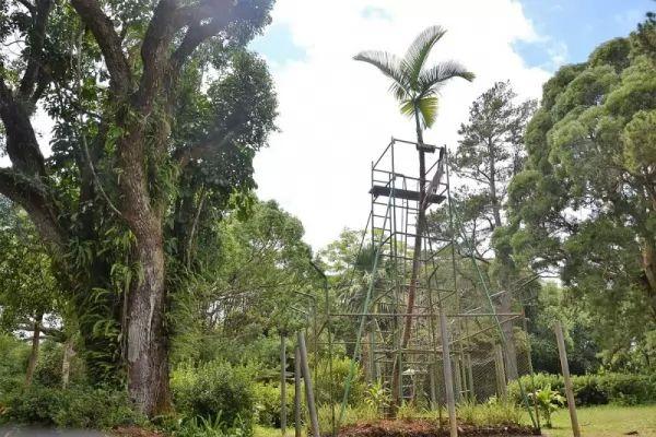 معلومات مذهلة عن أشجار النخيل بالصور Palm-trees-facts_10761_1_1539827430