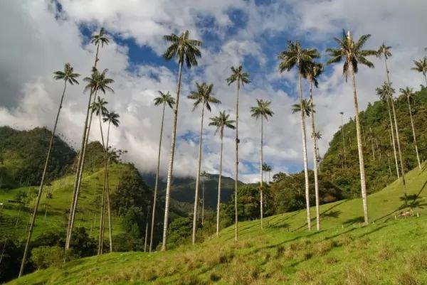 معلومات مذهلة عن أشجار النخيل بالصور Palm-trees-facts_10761_2_1539827431