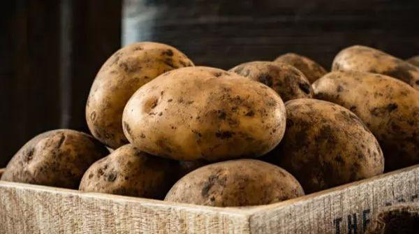 10 من الخضروات التي قتلت البشر 10-vegetables-that-have-killed-humans_10896_4_1546076635