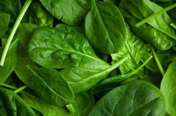 10 من الخضروات التي قتلت البشر 10-vegetables-that-have-killed-humans_10896_8_1546076639