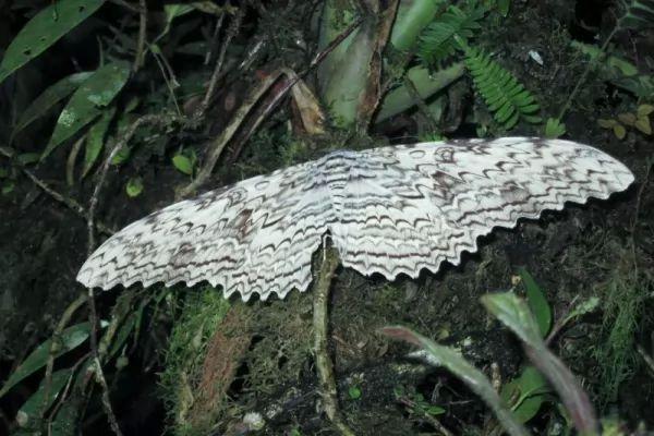 الساحرة البيضاء Largest-insects_10863_1_1544576600