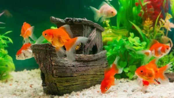 مستوى النيترات داخل حوض السمك