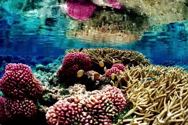 المرجان وتعريف بسيط Ocean-plants_10885_5_1545786733