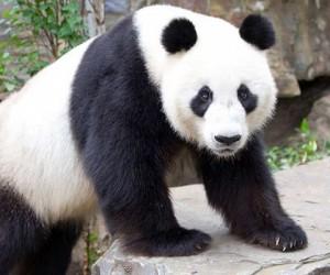 البشر هم أكبر خطر على بقاء الحيوانات المهددة بالانقراض من خلال الصيد غير المشروع وتدمير الموائل وآثار تغير المناخ، فهناك الكثير من الحيوانات المهددة ...