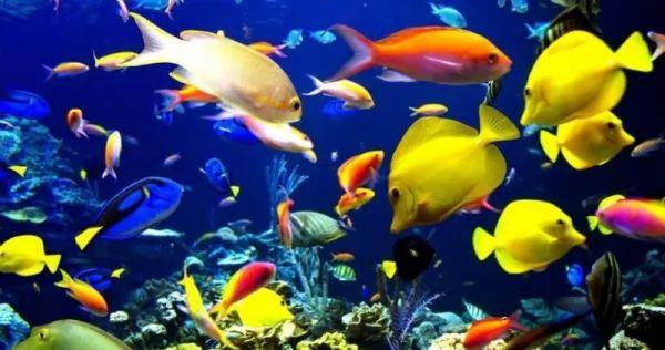 الخط الجانبي لدى أسماك الزينة
