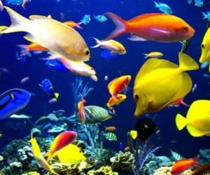 أسماك الزينة هي فقاريات من ذوات الدم البارد، وهذا يعني أنها تبقى في نفس درجة حرارة المياه المحيطة بها، وعلى النقيض من الثدييات التي تعيش في الماء مثل ...