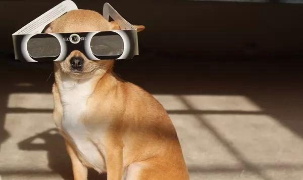 كيف تتأثر الحيوانات الأليفة بظاهرة كسوف الشمس ؟